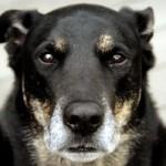 old_dog-300x199